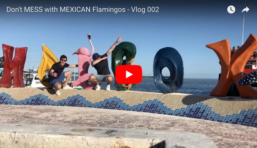Don't MESS with MEXICAN flamingos - Vlog 002